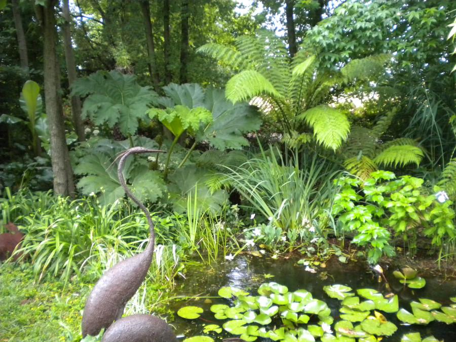 Le piante palustri for Piante palustri laghetto